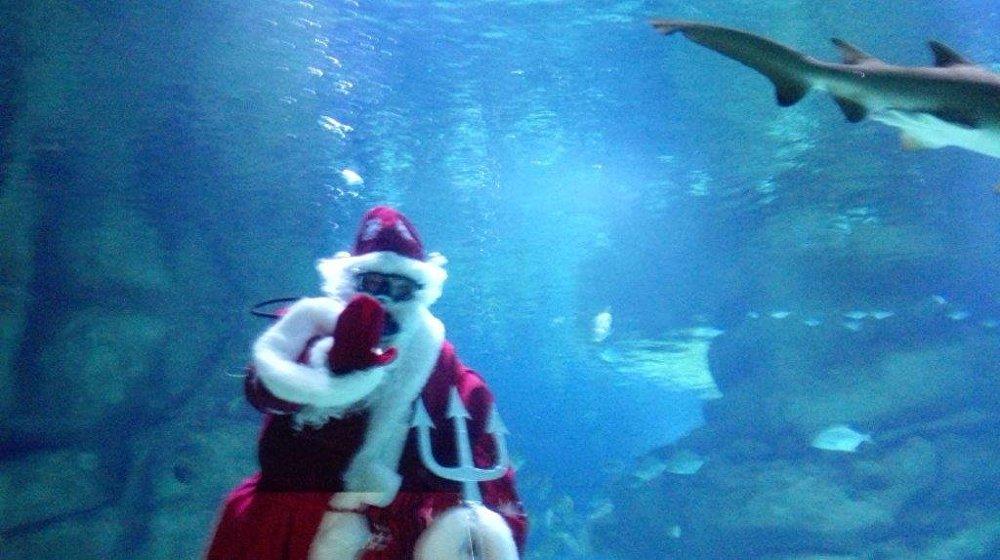 聖誕老人與鯊魚在水族館