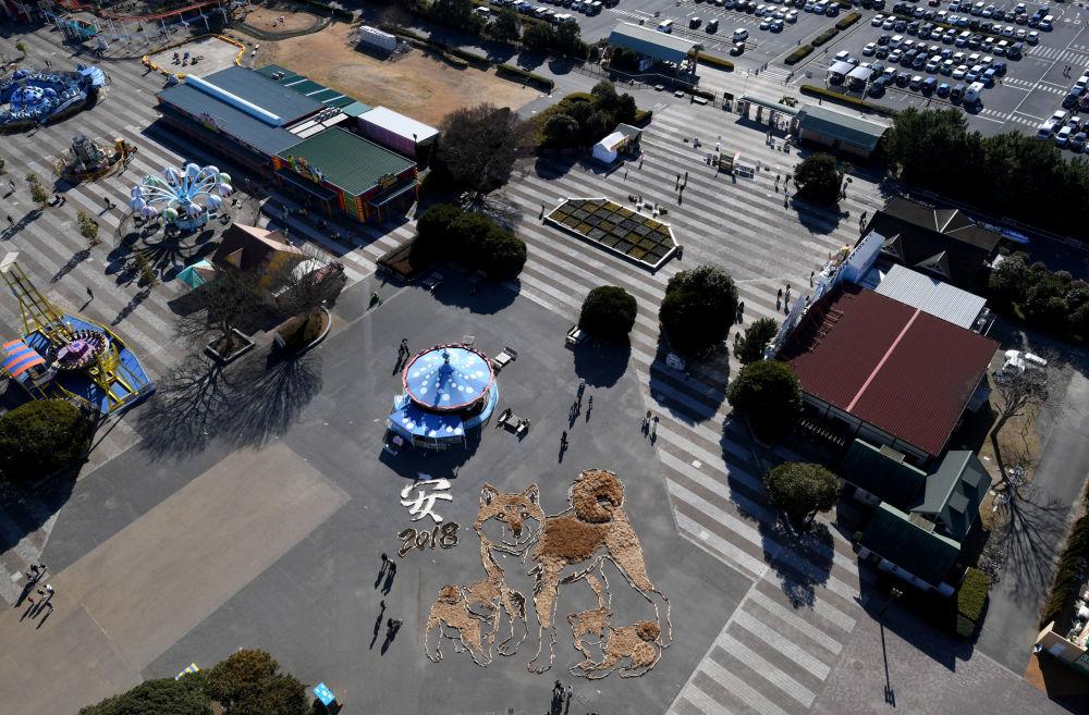 日本Hitachi Seaside Park公園22.5X27的狗雕。