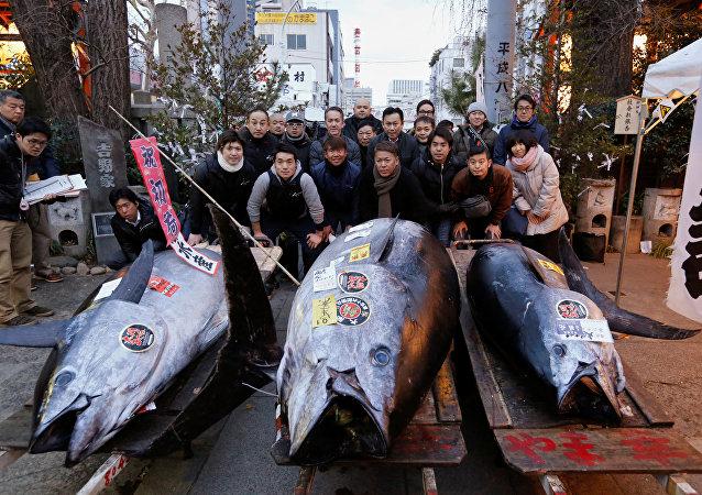 日本一條重達405公斤的藍鰭金槍魚