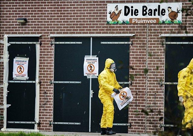 外媒:阿联酋禁止从荷兰进口所有禽类