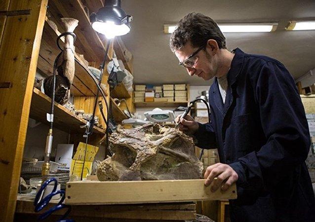 Ученый изучает окаменелые останки титанозавра