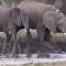 视频拍下一头愤怒的大象进攻河马的场面