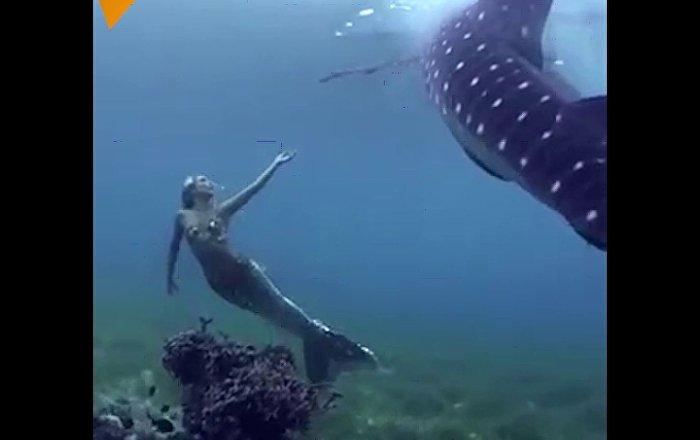 这是真的美人鱼吗?