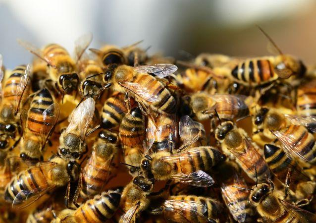 800只蜜蜂在俄乌边境被拦下
