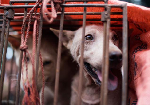 廣東省一名男子因偷狗並將狗肉賣給飯館被拘