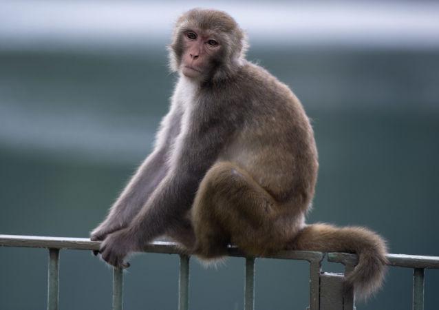 中科院:中国科学家成功掌握体细胞克隆猴技术