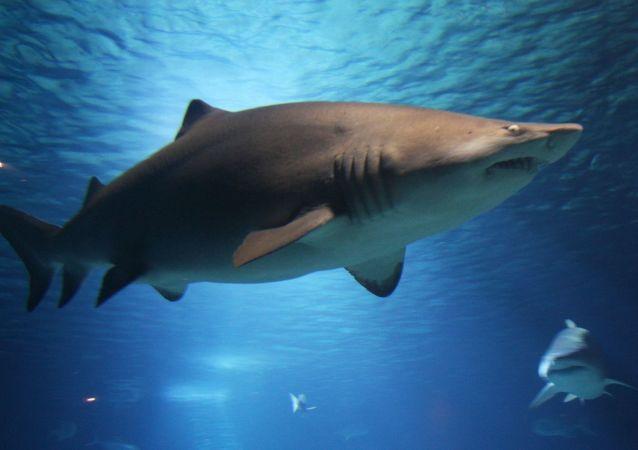 KISS乐队将在大海上为鲨鱼举行演唱会