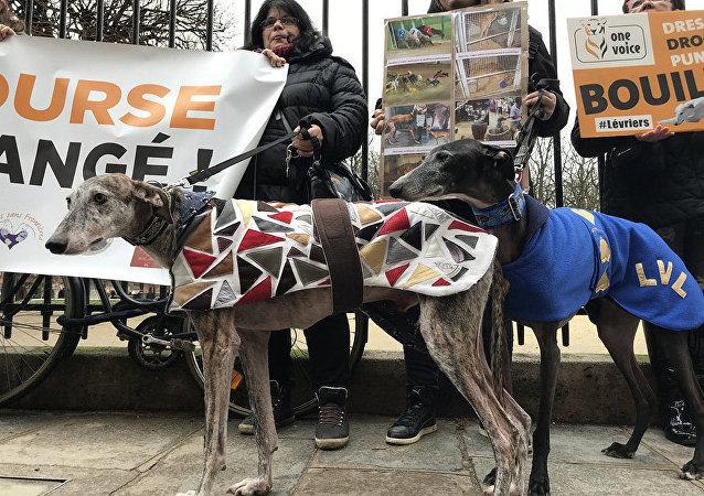 巴黎舉辦反對虐待意大利灰狗的抗議活動