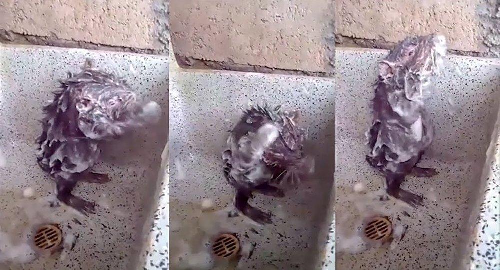 網紅視頻「老鼠洗澡」的秘密被揭開
