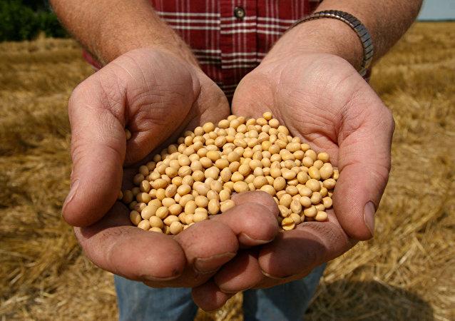 中国将区块链技术引入大豆交易