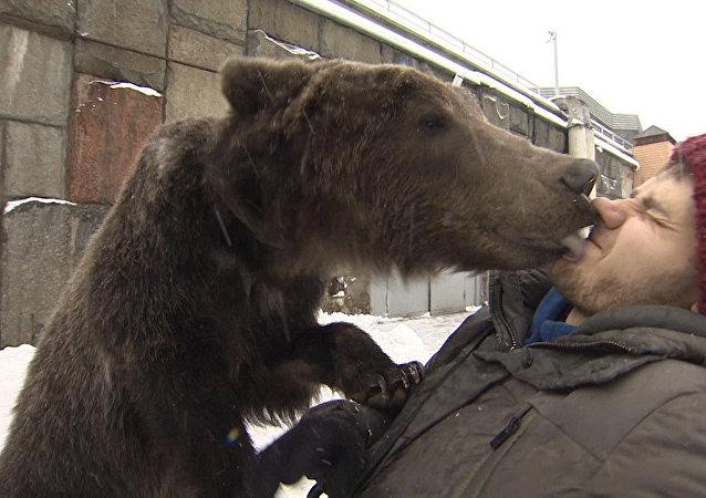 马戏团棕熊接驯养员出院