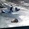 中國網站上出現一名退休工人被野豬襲擊的視頻