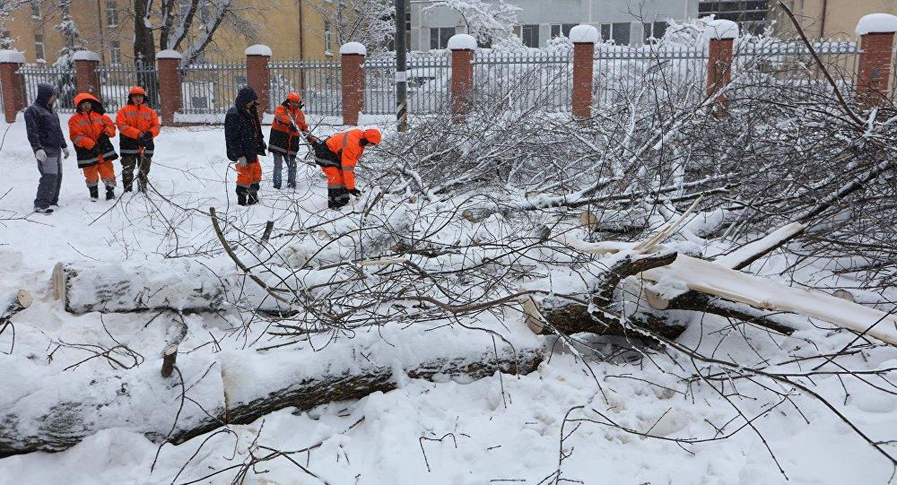 莫斯科副市长:该市大雪造成100多起树倒砸车事件俄罗斯