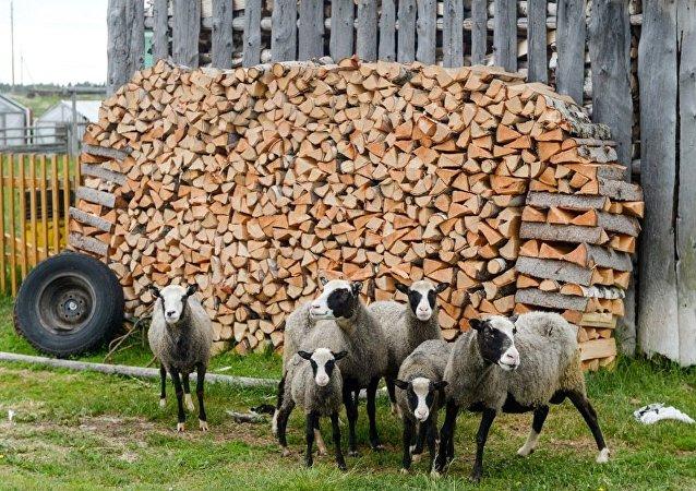 农场牲畜遭惊吓英国军方赔款二百万英镑