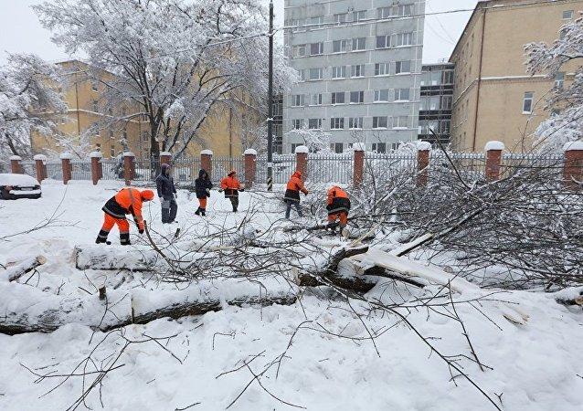 莫斯科降雪导致210多辆汽车被树木砸到