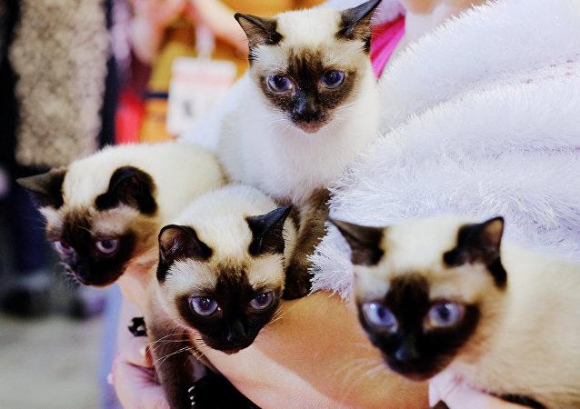 美國一名退休工人在自己家中養了300只貓