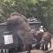 香港一校園驚現巨大野豬(視頻)