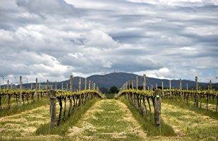 澳大利亞葡萄酒出口的未來掌握在中國手中