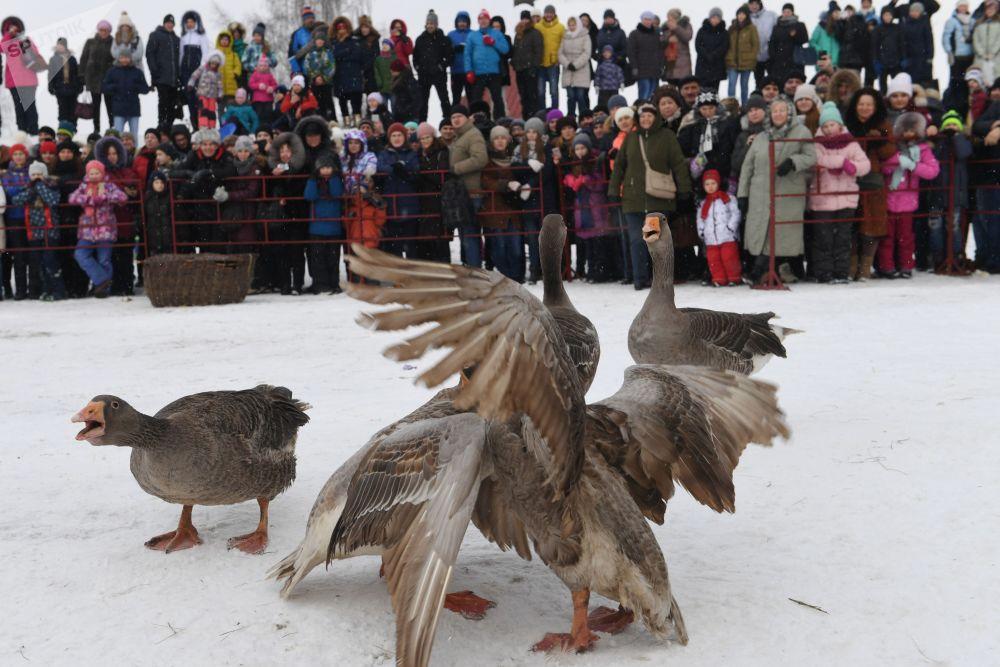 在苏兹达尔举行的与谢肉节相关的节日娱乐活动上的参与者,他们在观看斗鹅