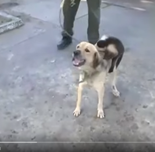 哥倫比亞一隻狗收養了一隻猴子
