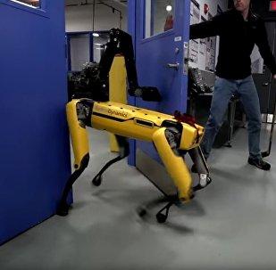 视频抓拍机器人狗和人较劲