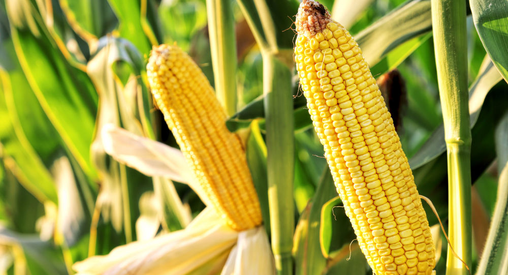 俄罗斯将扩大对华农产品出口