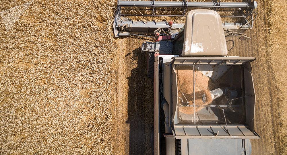 美国农业部:俄罗斯在2019-2020农业年将保持世界小麦出口领先地位