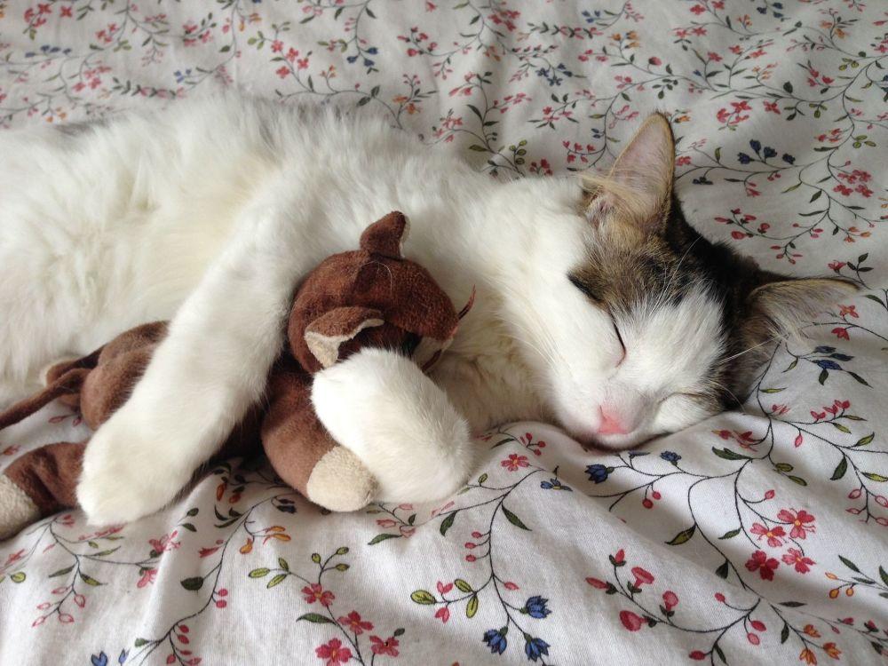 抱著心愛的玩具睡覺