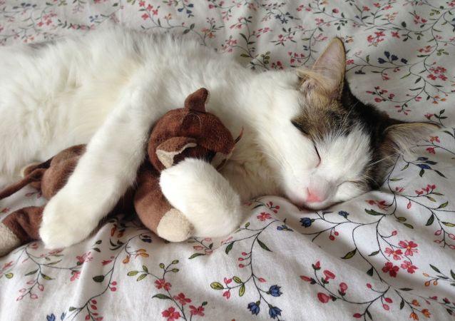 医生解释为什么不能和猫一起睡觉