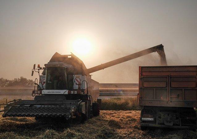 本农业年度谷物出口量将超5000万吨