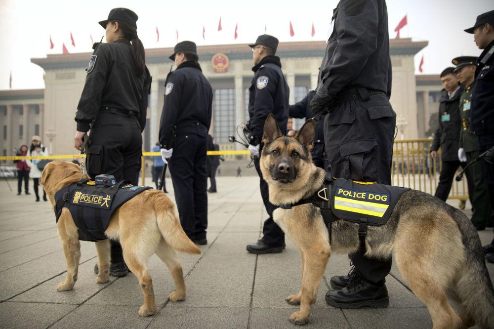 天安门广场上的警犬