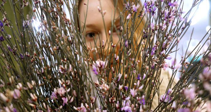 莫斯科市長:「三八」節前莫斯科運入5000萬朵鮮花用於銷售