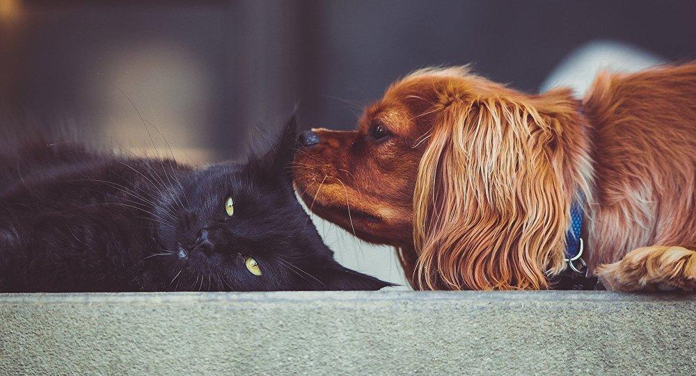 英国禁售小猫小狗