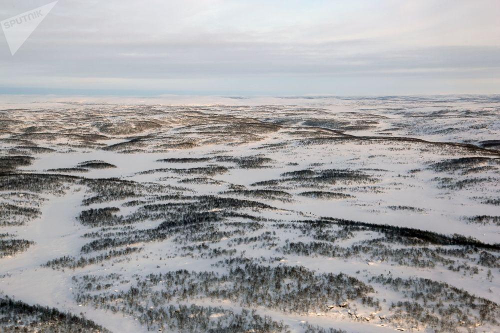 摩爾曼斯克州科拉半島的苔原