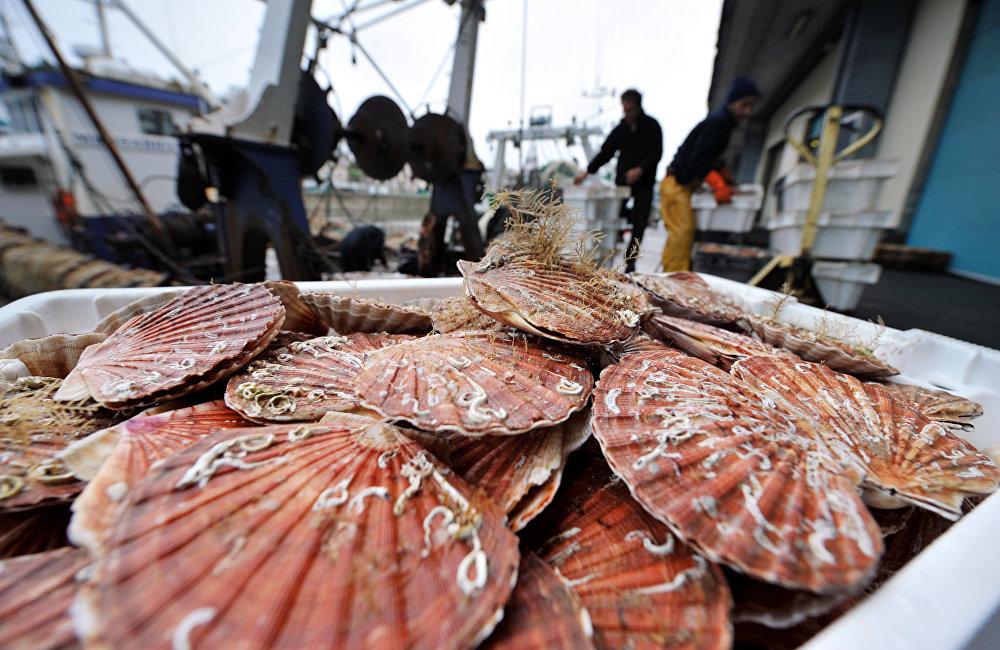 滨海边疆区的自然气候条件非常适合人工养殖各种海洋生物。这是吸引国内外投资者的竞争优势之一