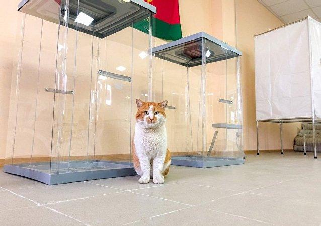 克里米亚大桥监工小猫又有新工作:监督大桥投票站准备情况