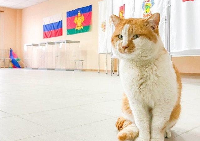 克里米亞大橋監工小貓又有新工作:監督大橋投票站準備情況