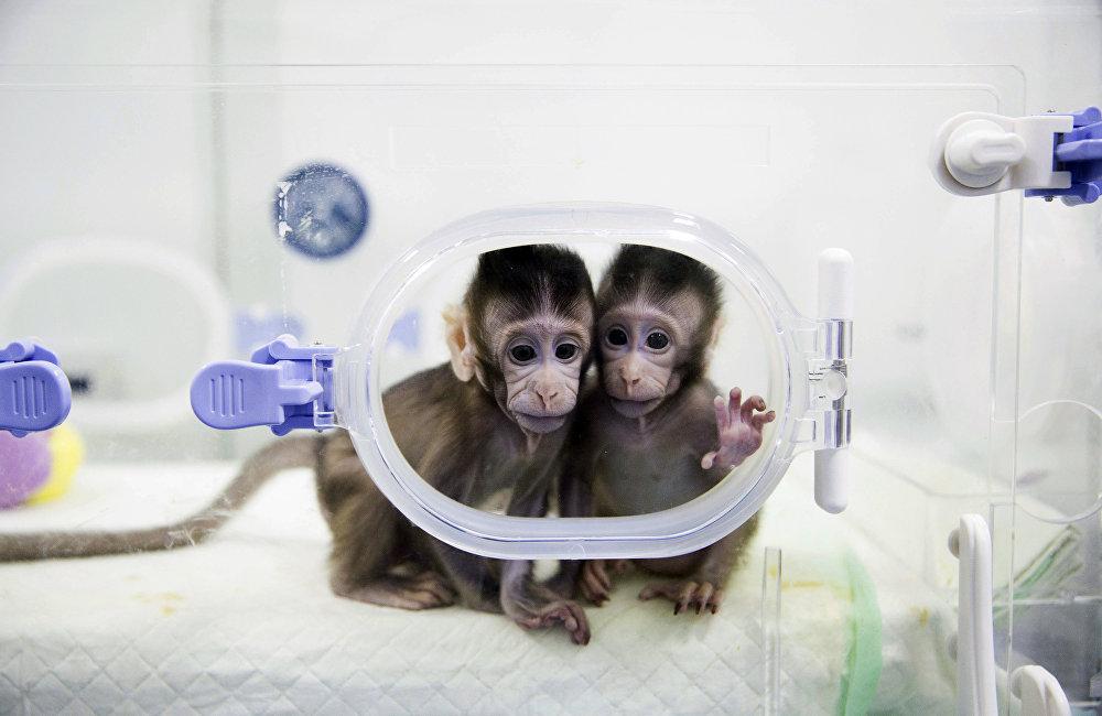 「中中」和「華華」兩只小猴