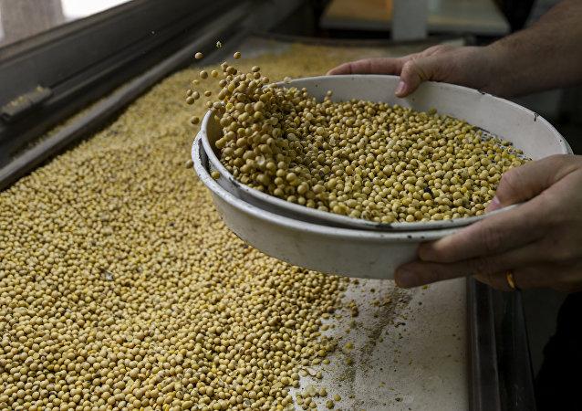 专家:俄罗斯替代美国向中国出口大豆是可能的