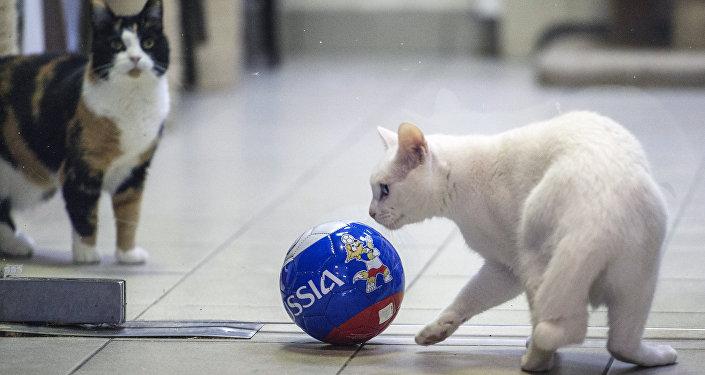 先知猫将预测2018世界杯赛结果