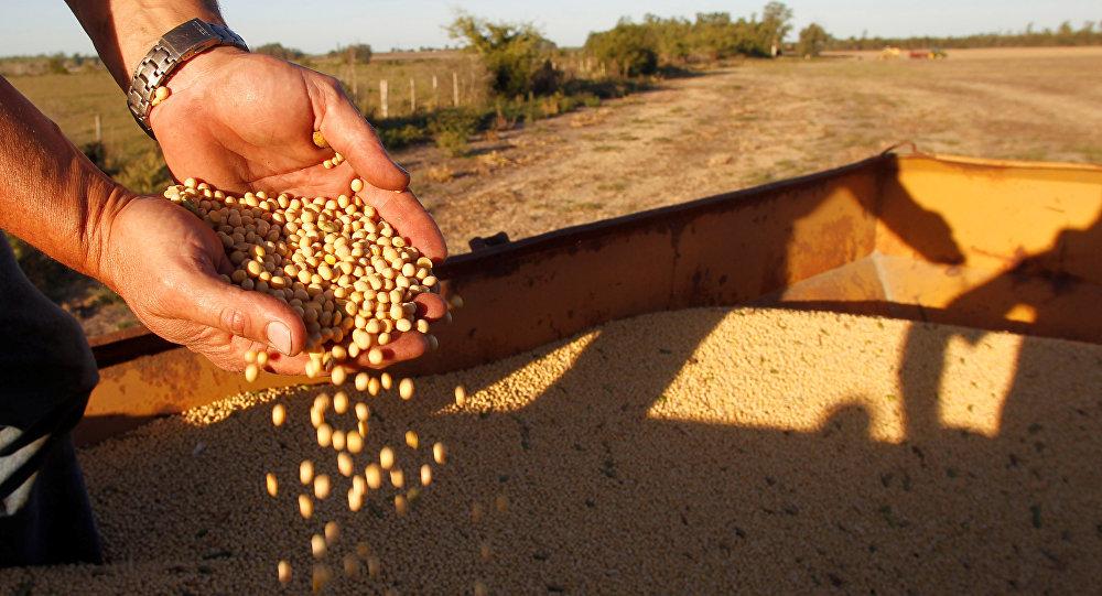 俄中公司或在俄犹太自治州联合建设大豆深加工工厂