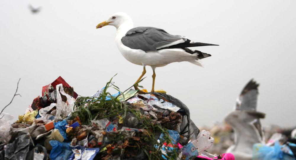 生物学家称在欧洲水貂养殖场之间传播新冠病毒的可能是鸟类