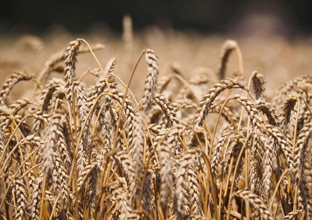 普京:农业已成为俄罗斯经济发展的火车头之一