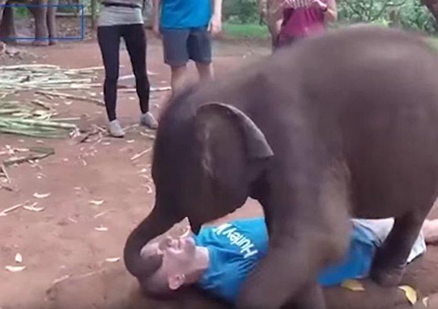 小象热情似火 也只有看管员能招架了
