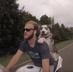 狗的幸福—與最好的朋友騎摩托車旅行