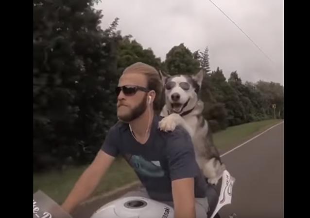 狗的幸福—与最好的朋友骑摩托车旅行