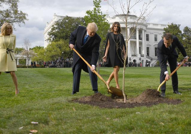 """特朗普与马克龙合栽的""""友谊之树""""已死亡"""