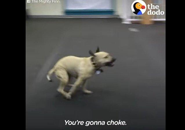这只狗是世界上的头号披萨粉丝