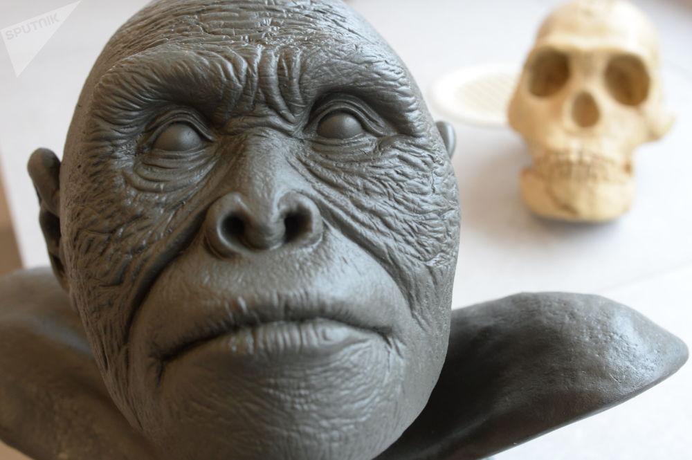 最初,人类学家根据纳莱迪人解剖学的原始特点,推测他们的生活时期在200-300万年前。但在2017年,根据对化石的分析,其年代被确定为23.6到33.5万年前。