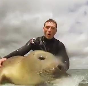 海豹玩冲浪板